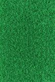 Green grass background. Stock Image