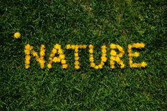 Green grass background with dandelions. Nature lettering stock images