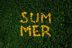 Green grass background with dandelions. Summer lettering royalty free stock photo