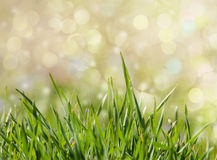 Green grass background with dreamy bokeh. In early spring Royalty Free Stock Photos