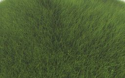 Green grass. Background with green grass on the field Royalty Free Stock Image