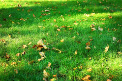 Green grass background from a field Stock Image