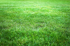 Green grass background from a field Royalty Free Stock Images