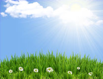 Green grass background with flowers Stock Image