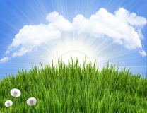 Green grass background with flowers Royalty Free Stock Images