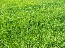 Green grass. Background Stock Photo