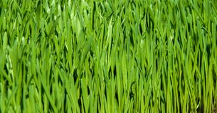 Green grass background Royalty Free Stock Images