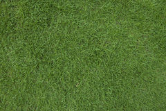 Green grass background. Green grass full fill in the frame Royalty Free Stock Photo