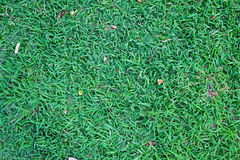 Green grass background. In garden Stock Photo