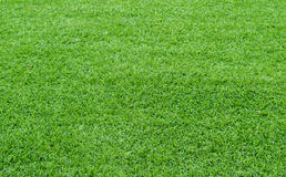 Green grass background. Growth outdoor Stock Photos