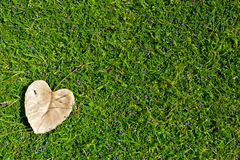 Green grass background. Heart-shaped leaves on green grass Royalty Free Stock Photos
