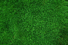 Green grass background. High angle view of green grass background Stock Photography