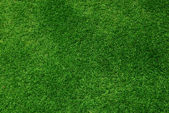 Green grass background. High angle view of real grass background Stock Photos