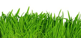 Green grass background, high resolution Stock Photo