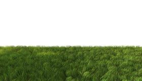 Green grass. Background isolated on white Stock Photography