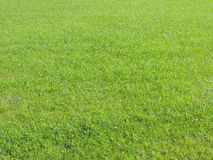 Green grass. Royalty Free Stock Photography
