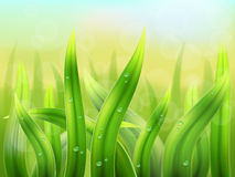 Green grass background macro Royalty Free Stock Image