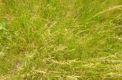Green grass background. Stock Photos