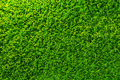 Green grass background. In the my home Stock Photography