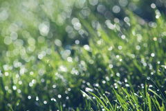 Green Grass Bokeh Background Stock Photo