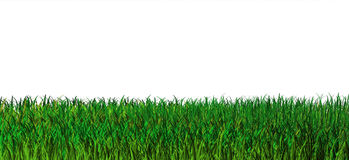 Green grass background. Nature. 3d render of fresh grass vector illustration