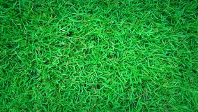 Green grass background, nature texture. Wallpaper stock photography