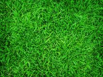 Green grass background, nature texture. Landscape area royalty free stock photo