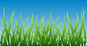 Green grass background. Green grass over blue sky border, field vector illustration. Symbol of nature, plant, ecology and growth. Summer horizontal background Royalty Free Stock Photos