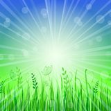 Green Grass Background over Blue Sky Royalty Free Stock Images