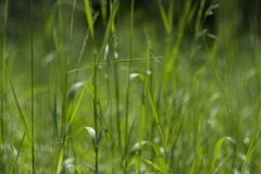 Perfect green background by the fresh grass royalty free stock photos