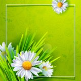 Summer meadow square art Stock Photo