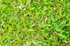 Green grass background. Green grass seamless texture background Royalty Free Stock Photo