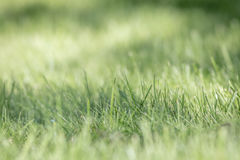Green Grass Background, selective focus Stock Photos