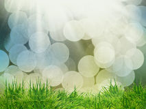 The green grass background Royalty Free Stock Photo