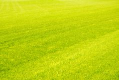 Perfect short cut green grass background Royalty Free Stock Image