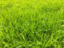 Green grass , background Stock Photos