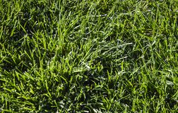 Green grass background. Summer spring nature stock images