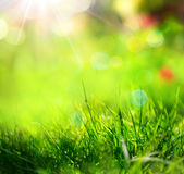 Green grass background with sunlight and blurs Stock Photo