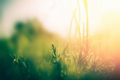Green grass background with sunshine. Summer nature landscape. Green grass background with sunshine. Summer sunset nature landscape royalty free stock photography