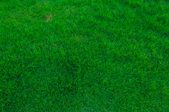 Green Grass. For background and texture Stock Photos