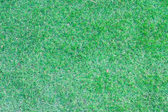 Green grass  background. Green grass texture for background Stock Images