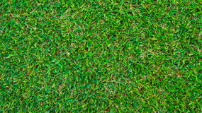Green grass. Background and texture Royalty Free Stock Photography