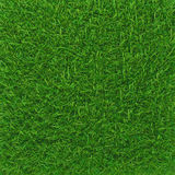 Green grass. background texture. Royalty Free Stock Image