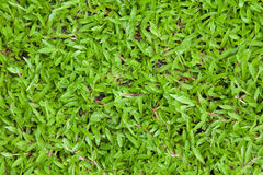 Green grass background texture. Stock Photography