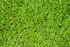 Green grass background texture. Stock Photo