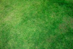 Green grass background texture. Stock Photos