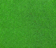 Green grass background texture stock photography