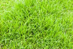 Green grass background texture Stock Photos