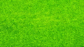 Green Grass Background Texture Stock Image