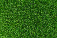 Green grass. background texture. Royalty Free Stock Photography